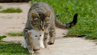 Download Спасение несчастных животных от гибели ... Video