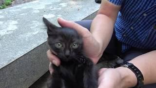 Download お目目の可愛い赤ちゃん黒子猫を捕獲🐱🐾 Video