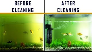 Download HOW TO : DIY EASY FISH TANK & FILTER CLEANING Video