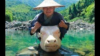 Download 【Shyo video】560元買個40斤重的牛頭,用大鐵鍋燉8小時,抱著直接開啃,吃著真爽 Video