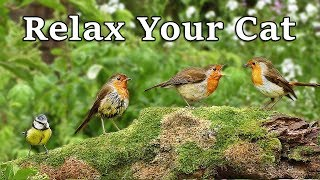Download Calming Videos for Cats - TV to Relax Your Cat and My Cat at Home : The Bird Garden Video
