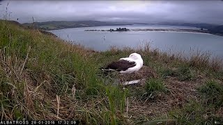 Download #RoyalCam live stream Video
