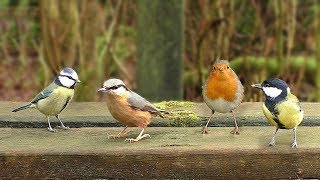 Download Video per Gatti : Uccelli che cinguettano nel parco Video