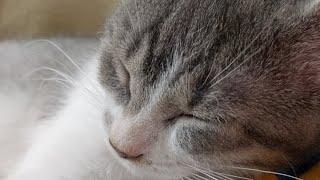 Download Kitten Close Up 2017-10-10 Video