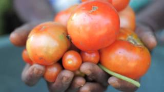Download Vidéo de présentation de la FAO Video
