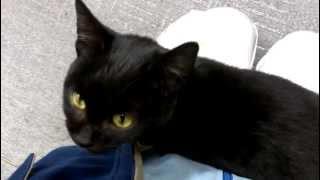 Download 職場のアイドル黒猫のジジちゃん Video