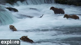 Download Brown Bears of Katmai Alaska Meditation powered by EXPLORE.org Video