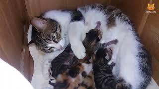 Download 「かわいい猫」 笑わないようにしようとしてください - 最も面白い猫の映画 #157 Video
