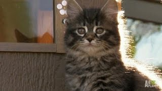 Download He May Be Small, But Boris Aims Big | Too Cute! Video
