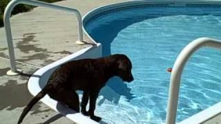 Download Jasper figures out the swimming pool Video