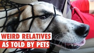 Download Your Weird Relatives As Told By Pets Video