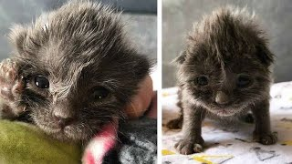 "Download Woman rescues abandoned kitten with ""bed head"" – say hi to Wolfie! Video"