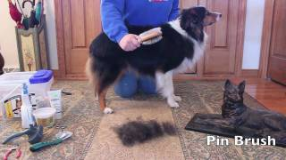 Download Grooming an Australian Shepherd Video