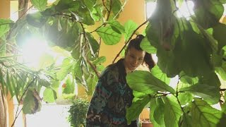 Download This woman turned her Brooklyn apartment into a forest Video