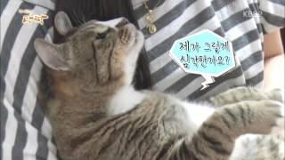 Download 반려동물극장단짝 E63 150608 내겐 너무 무거운 너 1부 뚱냥이, 너는 팻(fat) Video