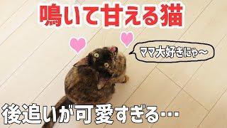 Download ママに鳴きながら全力で甘える猫が可愛すぎる… Video