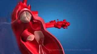 Download Human Circulatory System Video