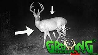 Download Deer Hunters: 10 Tips to Quickly Age Bucks (#406) @GrowingDeer.tv Video