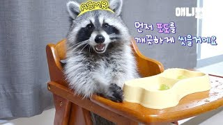 Download 자기가 먹을 포도 직접 씻어서 먹방하는 라쿤ㅋㅋㅋㅣRaccoon Washes Shine Muscat Grapes By Herself Before Mukbang LoL Video