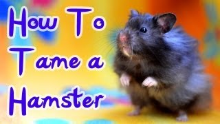 Download How To Tame A Hamster Video