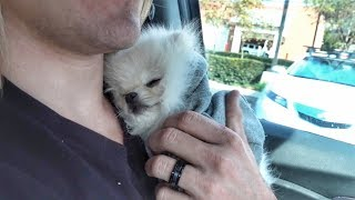 Download Taking our new puppy to the hospital.. (Stranger drops him on his back) Video