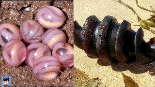Download 10種最外形離奇的動物蛋,繁殖方式一定讓你大開眼界! Video