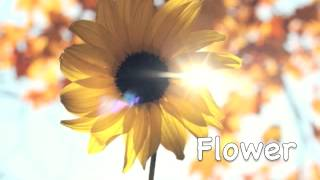 Download Happy Acoustic Background Music ″Flower″ (FREE) Video