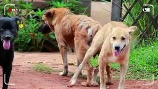 Download Собаки и щенки информация о животных vlog #8 Video