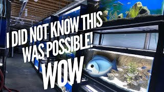 Download 94 CICHLID TANKS FULL of Fish & 40 Species IN a BASEMENT! Fish Room Tour | Jay Wilson Video