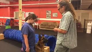 Download Dog Training Human | Aggressive Dog Kobe rehab | Solid K9 Training Dog Training Video