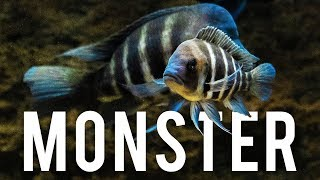 Download MONSTER Fish Room & Fish Store Tour Video