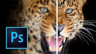 Download How to Sharpen Images in Photoshop Video