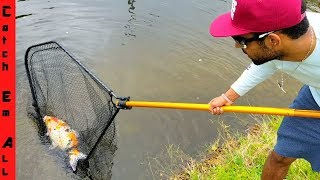 Download CATCHING GIANT $4,000 KOI FISH in CITY CANAL! new PET Video