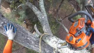 Download ″A Very Dangerous Tree Removal″ - Part 1 Video