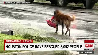 Download Photo of dog carrying bag of food in flood goes viral Video