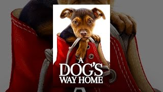 Download A Dog's Way Home Video