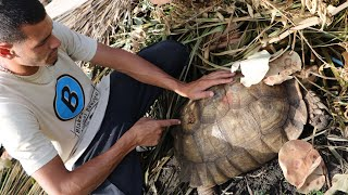 Download Turtle Rescue Mission!! From Someone With A Hammer Video
