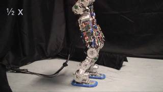 Download Compliant humanoid robot COMAN learns to walk efficiently Video