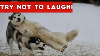 Download Try Not To Laugh At This Funny Dog Video Compilation | Funny Pet Videos Video