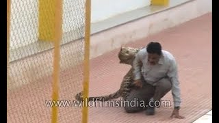 Download Leopard encounter in India Video