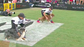 Download 30 Weave Up & Back Competition - 2016 Purina® Pro Plan® Incredible Dog Challenge® Western Regionals Video