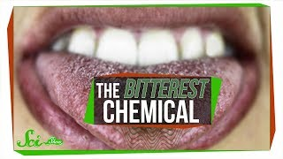 Download What's the Most Bitter Chemical? Video