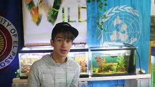 Download i lost my betta fish. Video