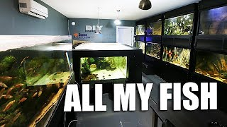 Download All my aquariums tour Video
