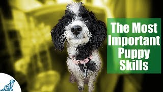 Download First Week Puppy Training - The 6 Skills To Teach First - Professional Dog Training Tips Video