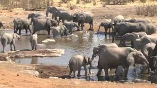 Download Elefanten am Wasserloch Video