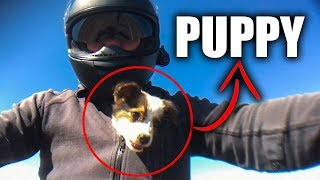 Download CUTE PUPPY SAVED BY BIKER | BIKERS ARE NICE | [EP. 81] Video