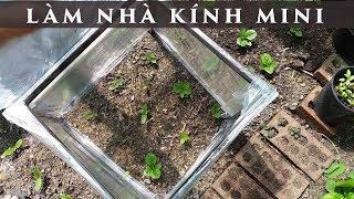 Download Làm nhà kính mini trồng rau lá lốt - toan trinh garden - green house Video