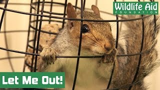 Download Wild birdfeeder on the loose at Wildlife Aid! Video