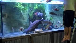 Download Monster Aquarium 1100g Feeding Video